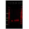 jvsm-2325-4645-01-0003-thumbFig2