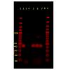 jvsm-2325-4645-01-0003-thumbFig3