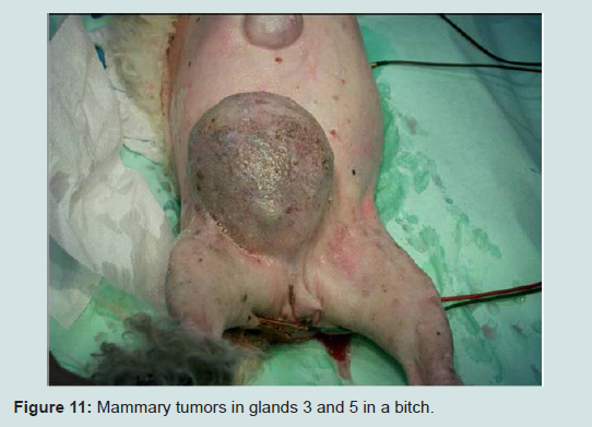 Full Text Article :: Current Surgical Options for Mammary Tumor ...
