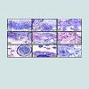 JNH-2469-4185-01-0008-thumbfig1