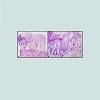 JCID-2373-1044-04-0024-thumbfig2